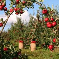 festa della mela_ Foto di lumix2004 da Pixabay