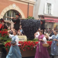 festa-uva-merano-stella-alpina