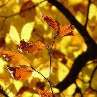 foliage_Foto di Hans Braxmeier da Pixabay